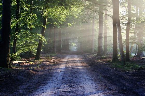 road-815297_1280