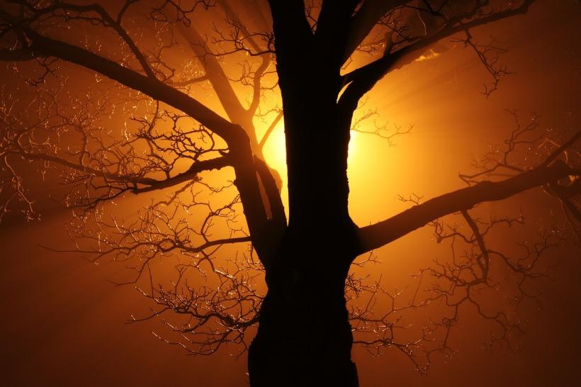 Tree shadow sun