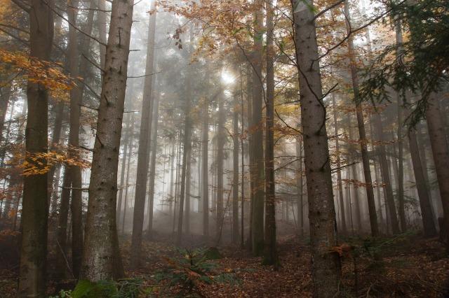 trees fog